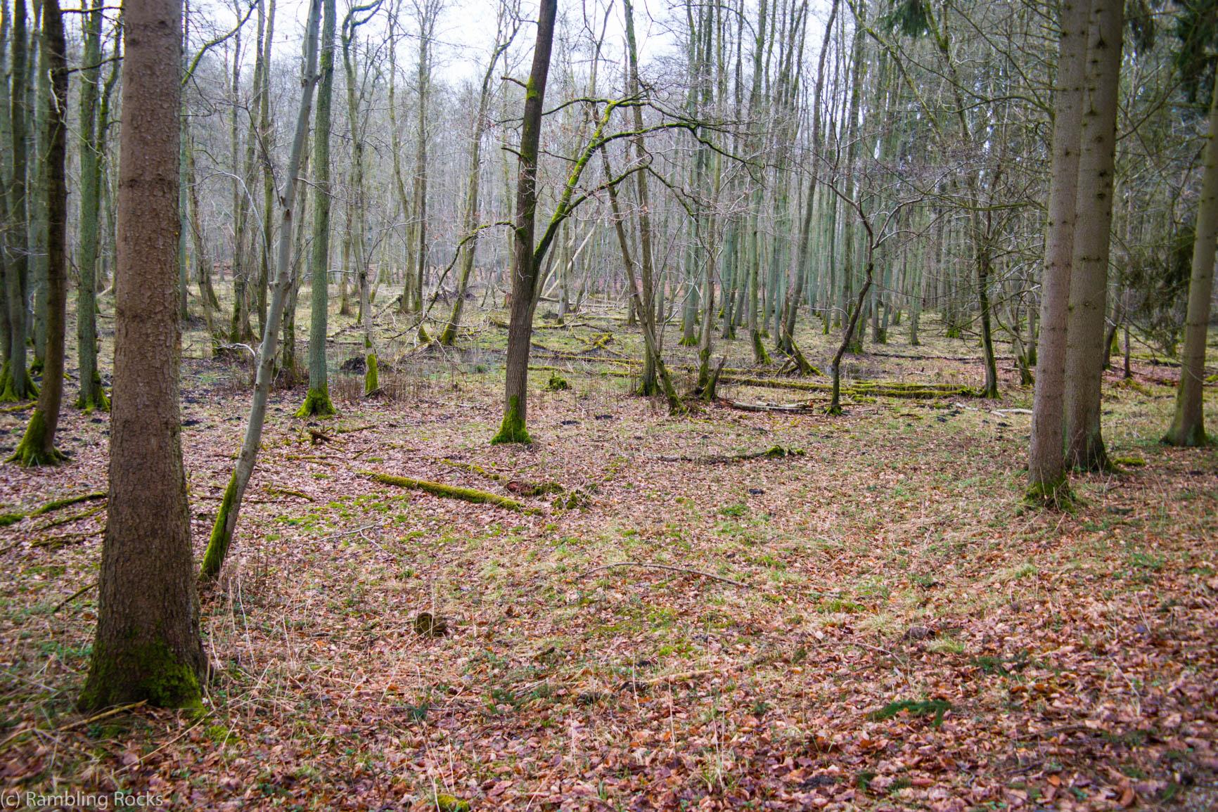 Ivenacker Wald