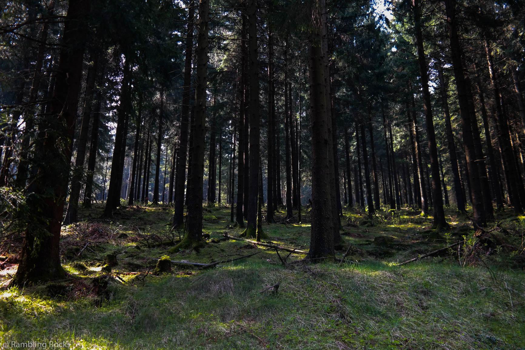 Sonnenlicht im Harz Wald