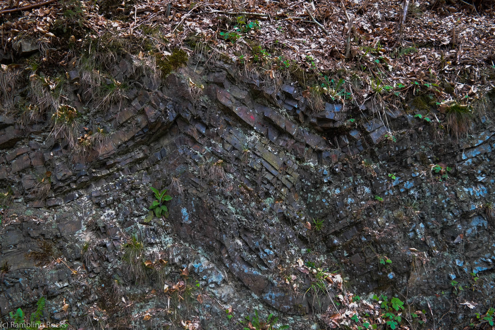 Falten Geologie Harz