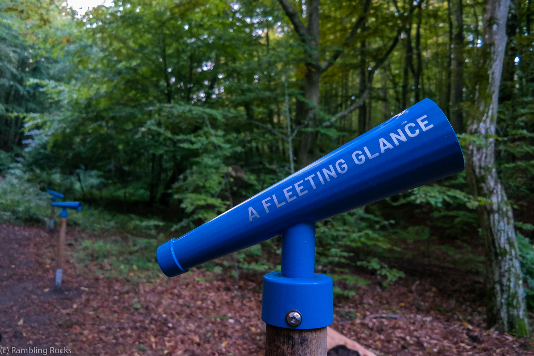 Mit allen Sinnen durch den Wald Granitz