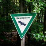 Waldzelle