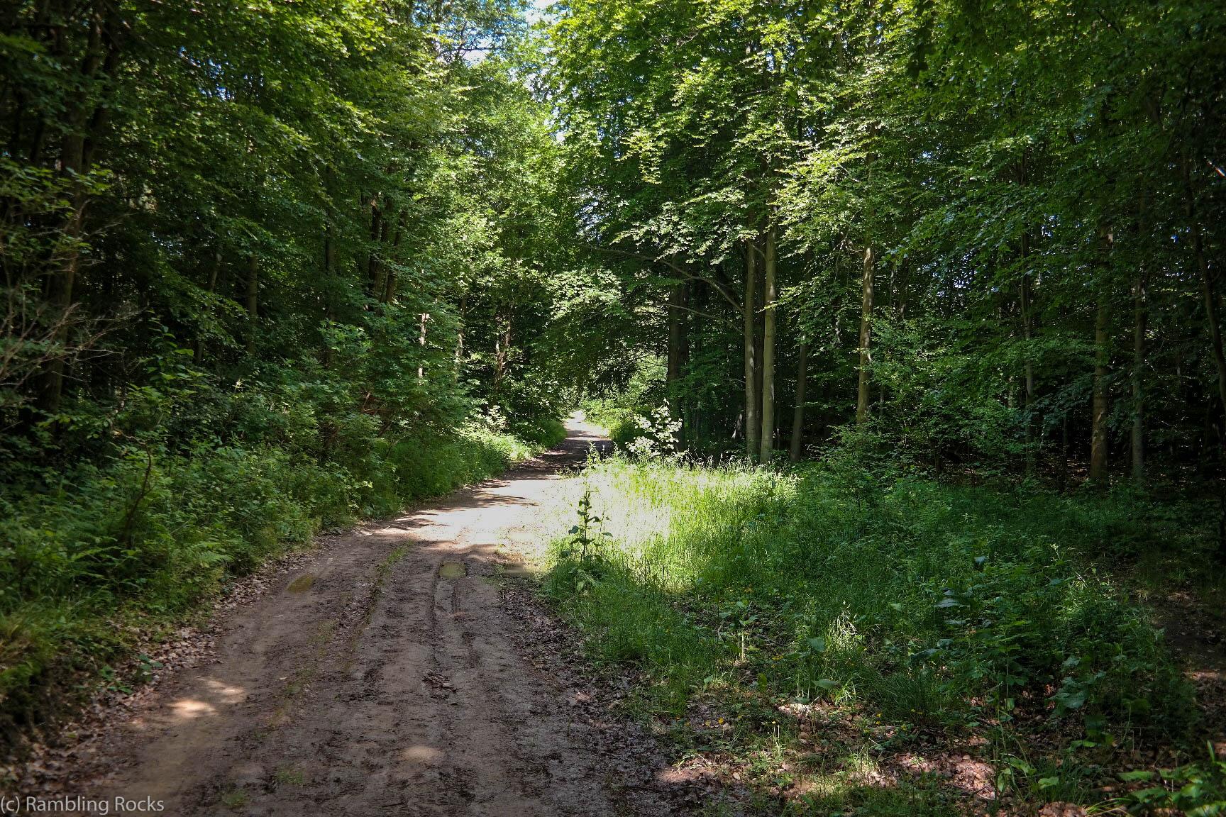 Waldweg im Bodetal